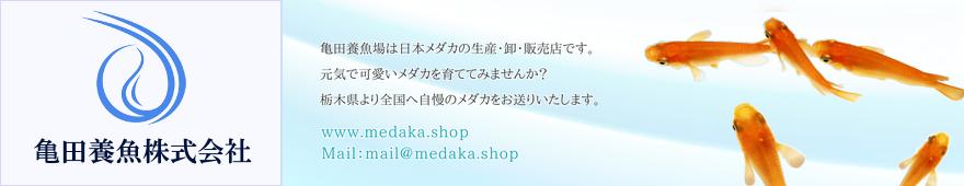 亀田養魚株式会社は日本メダカの生産・卸・販売店です。
